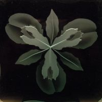 Iris flower sandblasted glass etching close up by ImaginedGlass
