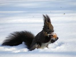 Squirrel 2 by Bogdan-Zop