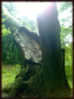 old tree by AlexBlood