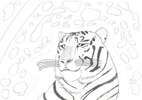 My original artwork - White Tiger - WiP by MortenEng21
