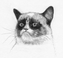 Grumpy Cat by grini