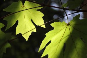 Leaves by YourEvilAddiction