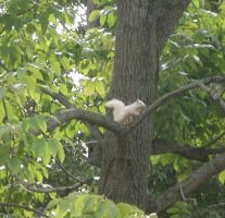 Albino Squirrel by Iceman31