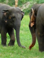 elephant stand off by mackyster