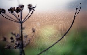 Spider Architecture by Nigel-Kell