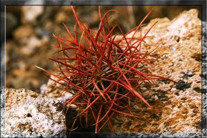 Red-Alien-Flower-Thing ??? by Dudovitz