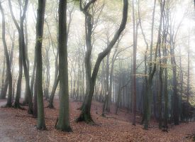 Forest by Inilein