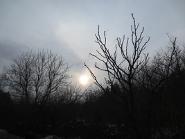 Sky Through Branches 1 by somnia-stock