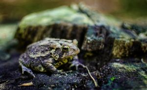 Mr. Toad by braxtonds