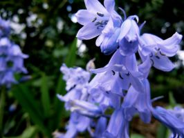 Bluebell by MadeleineAlana