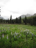 Blue Flowers Meadow 7 by prints-of-stock