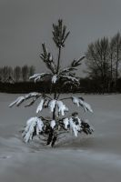 Snow Tree. by chivt800