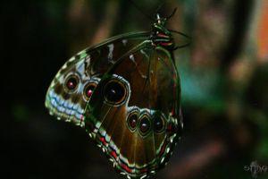 Butterfly 2 by stinq