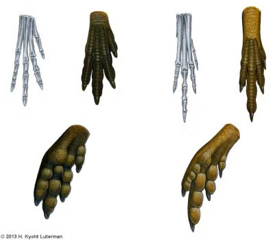 Dinosaur Feet Diagram by kyoht