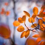 Autumn painting...II. by MartaC