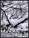 Snow Covered by Annetteks