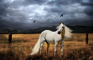Ghostly obsession by HorseWhisperer101