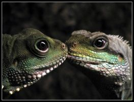 lizzards in love... or... by jamesboy