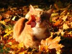 cats and autumn by small-ambulance