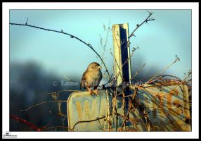 Guard Bird by LoneWolfPhotography