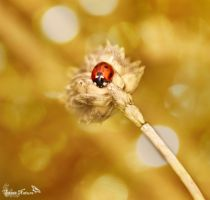 Ladybug I by Sweet-Nature