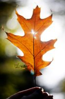 autum time by DominoPhotography
