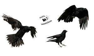 Cut-out stock PNG 34 - pack of 3 crows by Momotte2stocks