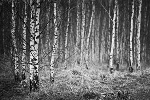 In the forest by maariusz