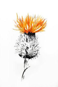 Fire Thistle by GeorgieDeeArt