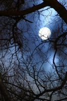 Trees and Moon - 3545 by utoks