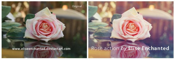 Rose action by EliseEnchanted
