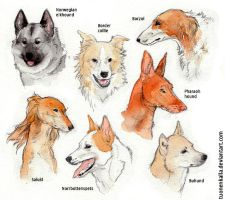 More pretty dogs by Tuonenkalla