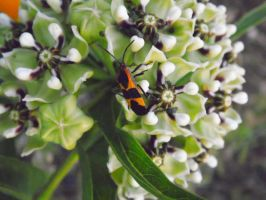 Insect Landscapes by TheGerm84