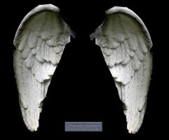 Wings: white angel 01 by elisafox-stock