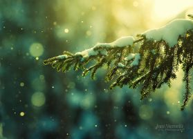 Pine Needles In The Snowfall by Nitrok