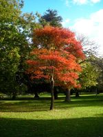 Red Tree by playfielder