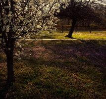 First Signs of Spring IV by christinavk