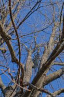 Branches by SnapShot120
