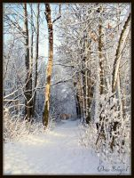 Road to Winter by DeniseSchingeck