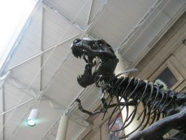DNH T. rex 3 by TheMacronian