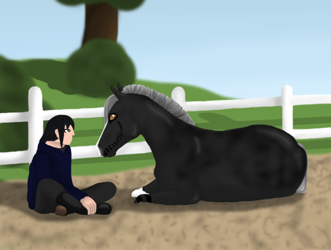 Don't look AWAY -Liberty Entry by Shadow--Stables