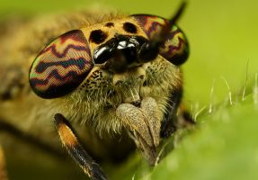Horsefly 2 by Alliec