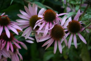 view to echinacea 4 by ingeline-art