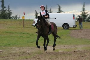 Bay Warmblood Horse Cross Country Eventing by HorseStockPhotos