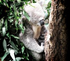 Drop Bear by Seralunai