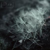 Dandelions.kites.wind... by head-in-the-cloud