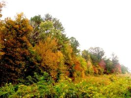 Fall Colors by ThEquivalency