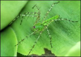 Green Spider II by craftworker