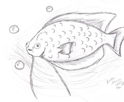 Gourami by Luca-Cooper
