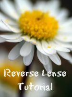 reverse lense for beginners by 0jabberwock0